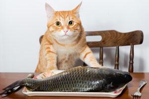 Основной принцип метода Шлимана: без труда не выловишь и рыбку из пруда.