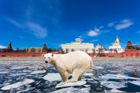 Не все мифы имеют право на существование. В России медведи не ходят по улицам, а русские преподаватели ничем не хуже зарубежных.