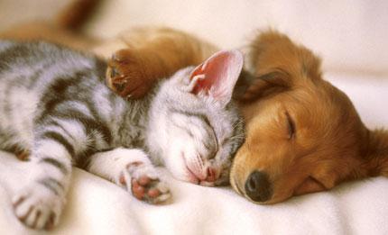 A quiet conscience sleeps in thunder. – С чистой совестью и в грозу спится.
