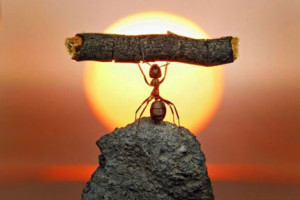The only thing in life achieved without effort is failure. — Единственная вещь в жизни, которая дается без усилий, — неудача.