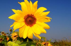 Тянитесь вверх, и пусть ростки знаний превратятся в прекрасные цветы!