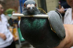 a little bird told me — сорока на хвосте принесла, земля слухами полнится,до меня дошли слухи, кое-кто мне сказал