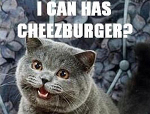 I can has cheeseburger?