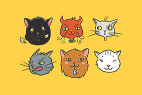english-idioms-about-cats