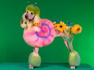 Странное хобби: экстремальная стрижка собак