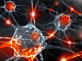 neurony_xl