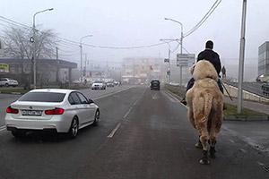 Ехать на верблюде по шоссе