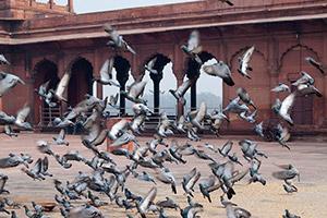 To put/set the cat among the pigeons — сильно взволновать, ошеломить